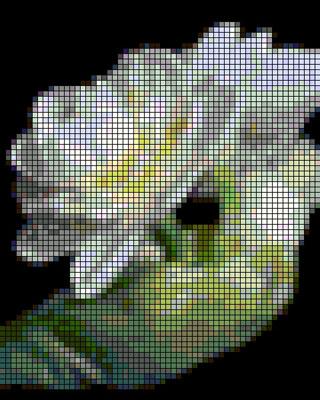 Это цитата сообщения Надежда_Олеговна Оригинальное сообщение, Тюльпаны.  Вышивка крестом.  Вот еще одно розовое чудо.